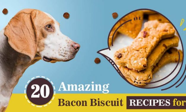 20 Best Bacon Dog Biscuits Recipes