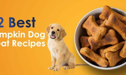 32 Best Pumpkin Dog Treat Recipes