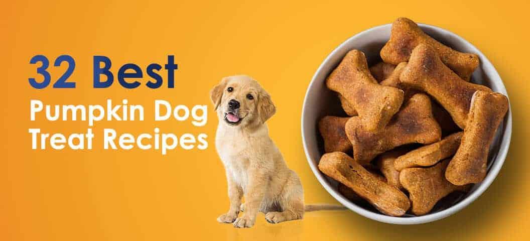 32 Best Pumpkin Dog Treat Recipes