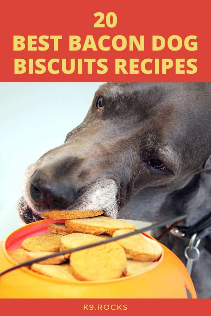 the dogs love the taste of bacon that many dog owners put in the treats for the dogs. We have gathered all the best recipes for the dog with taste of bacon