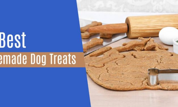32 Homemade Dog Treats