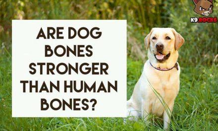 Are Dog Bones Stronger Than Human Bones?