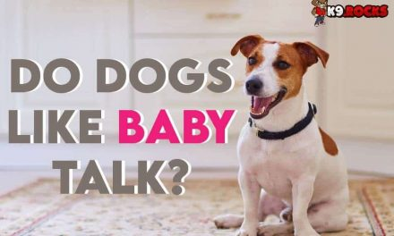 Do Dogs Like Baby Talk?
