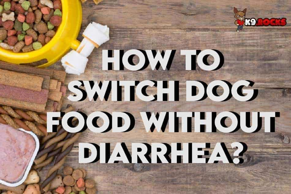 How to Switch Dog Food Without Getting Diarrhea