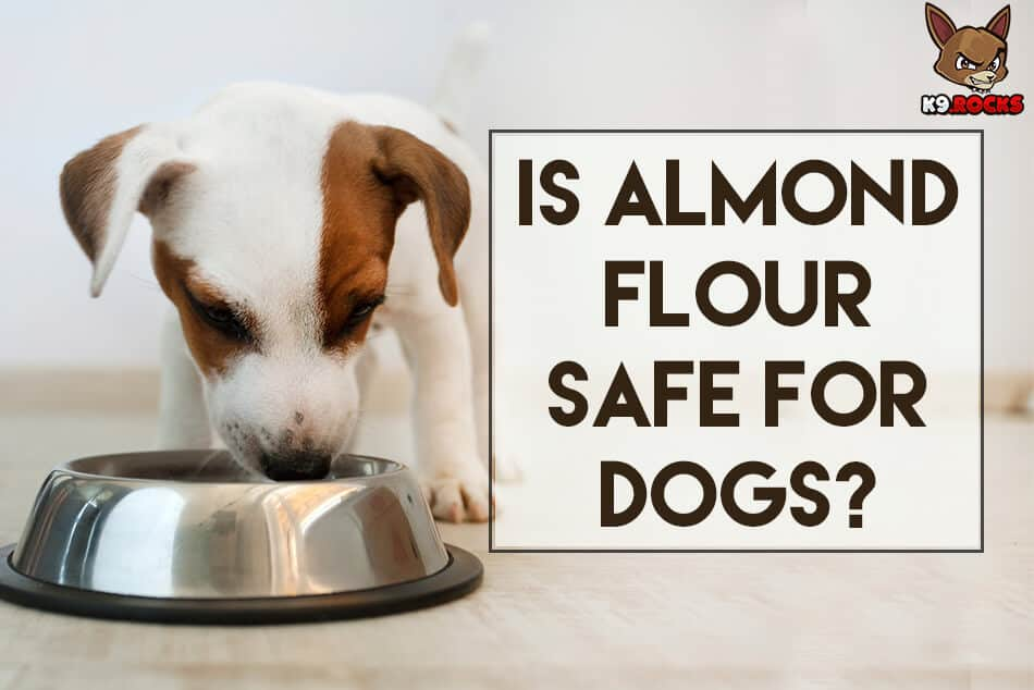 Is Almond Flour Safe For Dogs?