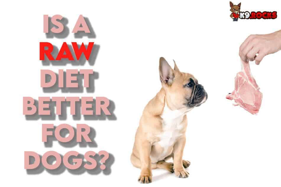 Is a Raw Food Diet Good For Dogs?