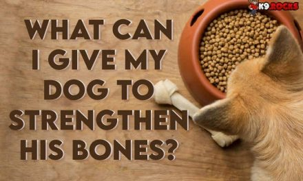 What Can I Give My Dog To Strengthen His Bones