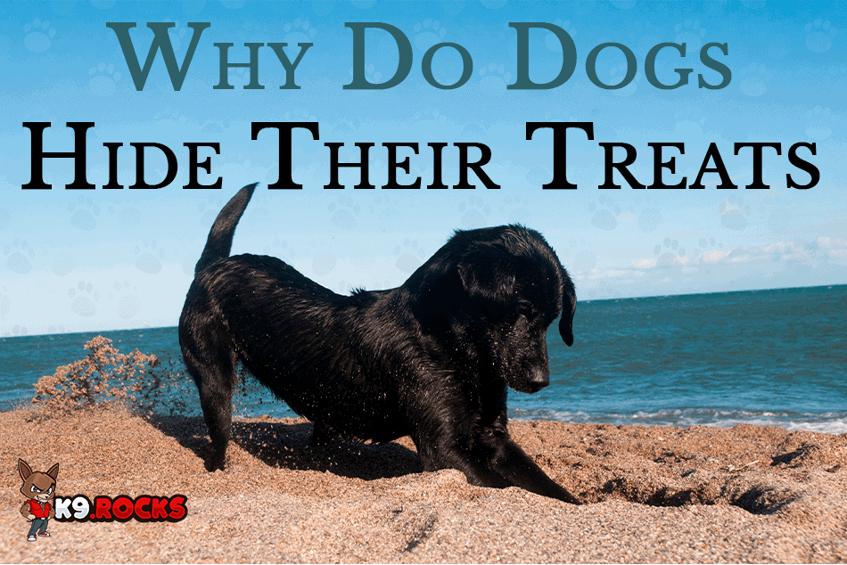 Why Do Dogs Hide Their Treats