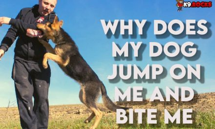 Why Does My Dog Jump on Me and Bite Me