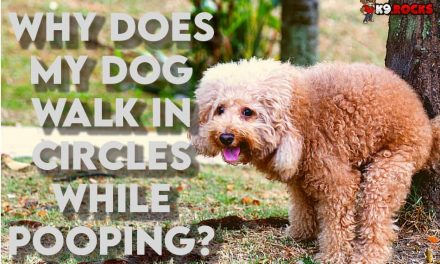 Why Does My Dog Walk In Circles While Pooping?