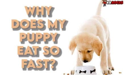 Why Does My Puppy Eat So Fast