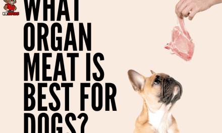 What Organ Meat is Best for Dogs?