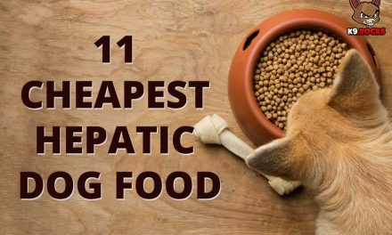 11 Cheapest Hepatic Dog Food