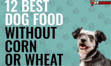 12 Best Dog Food without Corn or Wheat