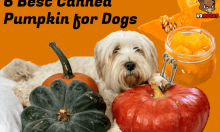 6 Best Canned Pumpkin for Dogs