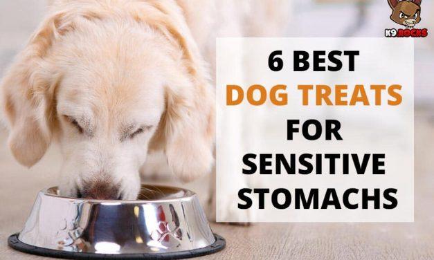 6 Best Dog Treats for Sensitive Stomachs