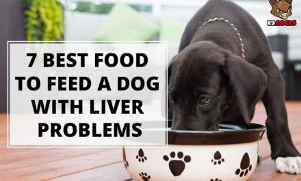 7 Best Food to Feed a Dog With Liver Problems