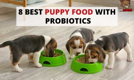 8 Best Puppy Food with Probiotics