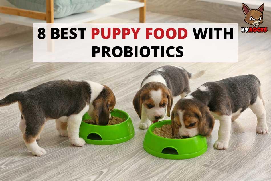 8 Best Puppy Food with Probiotics