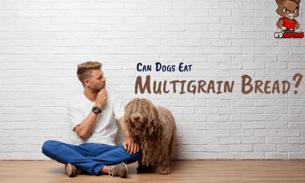 Can Dogs Eat Multigrain Bread?