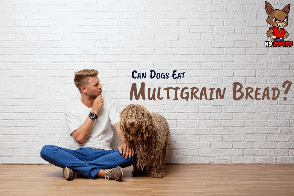 Can Dogs Eat Multigrain Bread?