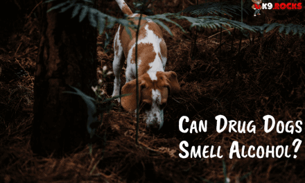 Can Drug Dogs Smell Alcohol?
