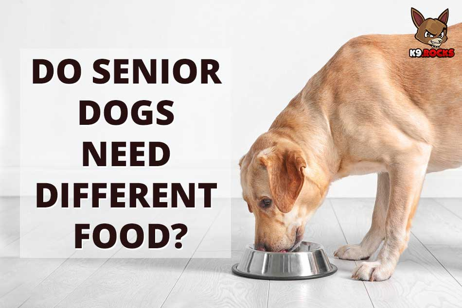 Do Senior Dogs Need Different Food?