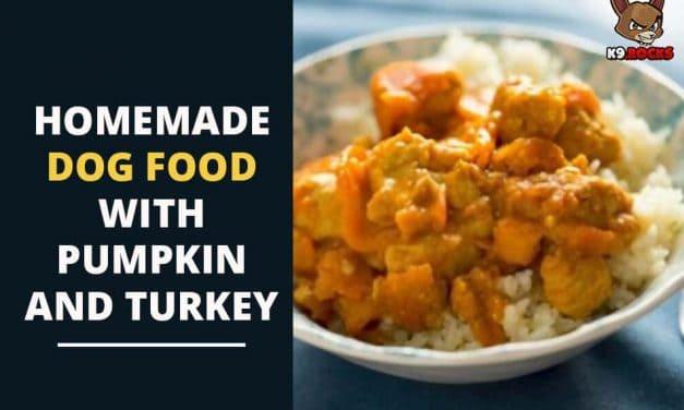 Homemade Dog Food with Pumpkin and Turkey