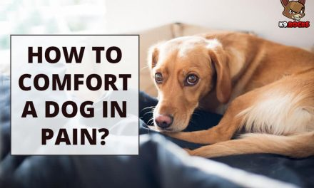 How to Comfort a Dog In Pain?