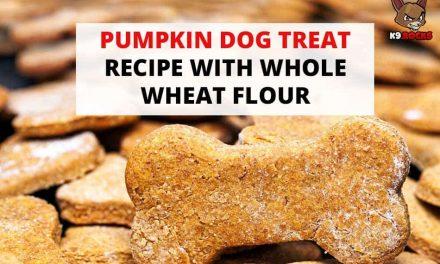 Pumpkin Dog Treat Recipe With Whole Wheat Flour