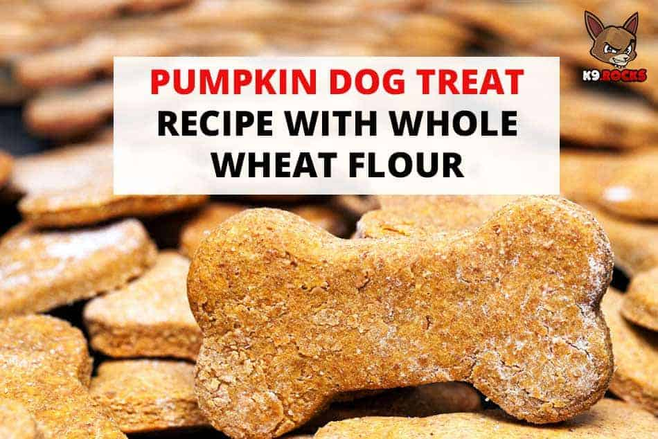 Pumpkin Dog Treat Recipe With Whole Wheat Flour