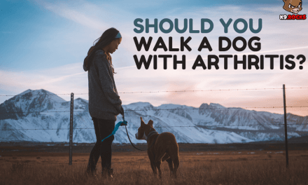 Should You Walk a Dog with Arthritis?