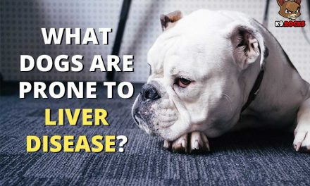 What Dogs Are Prone To Liver Disease?