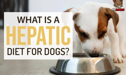 What Is a Hepatic Diet For Dogs?
