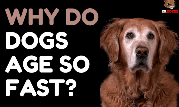 Why Do Dogs Age So Fast?