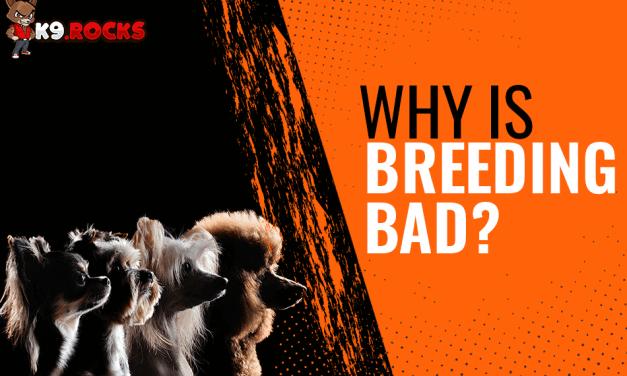 Why Is Dog Breeding Bad?