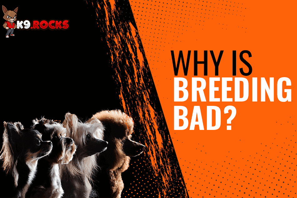 Why Is Dog Breeding Bad?