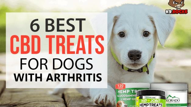 6 Best CBD Treats for Dogs With Arthritis
