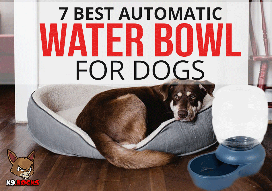 7 Best Automatic Water Bowl for Dogs