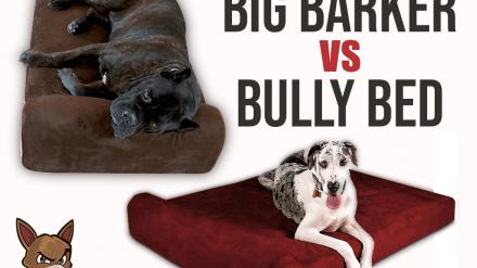 Big Barker vs Bully Bed