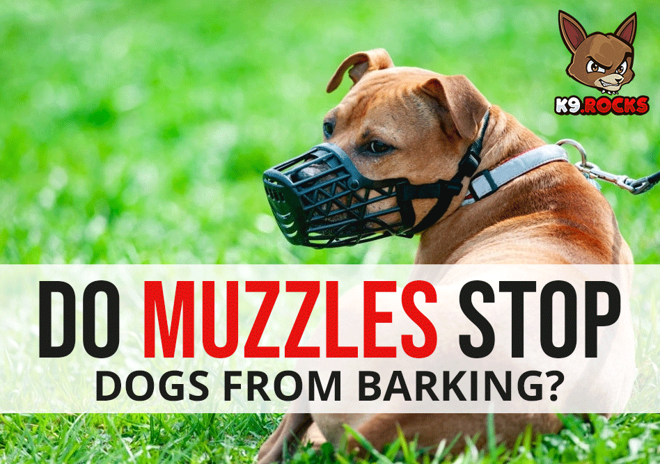 Do Muzzles Stop Dogs from Barking?
