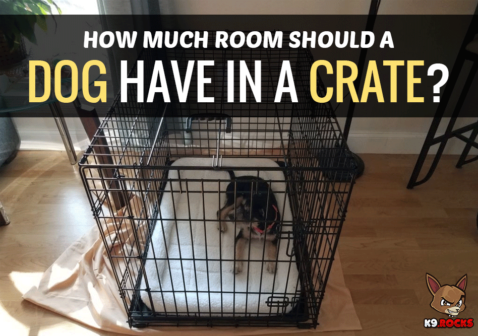 How Much Room Should a Dog Have in a Crate?