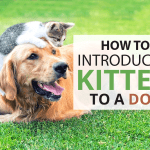 How To Introduce A Kitten To A Dog