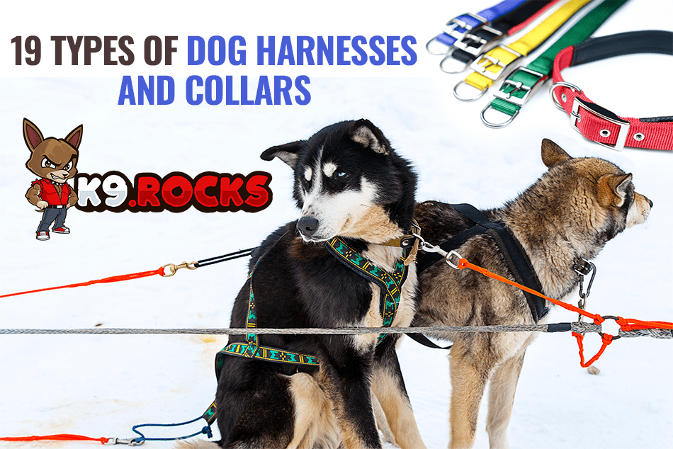 19 Types of Dog Harnesses and Collars