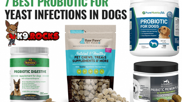 7 Best Probiotic for Yeast Infections In Dogs