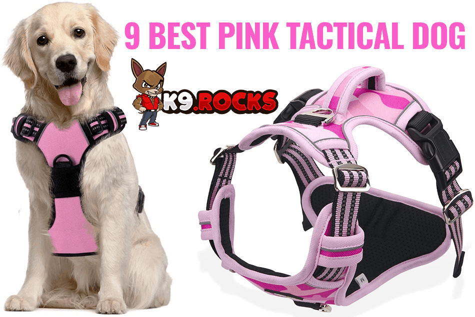 9 Best Pink Tactical Dog harness