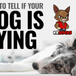 How To Tell If Your Dog Is Dying?