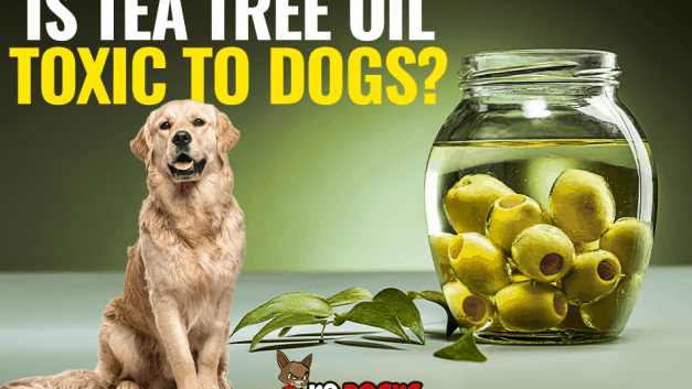Is Tea Tree Oil Toxic To Dogs?
