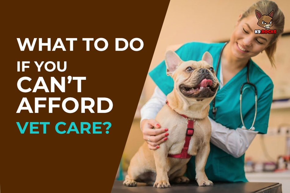 What To Do If You Can't Afford Vet Care?