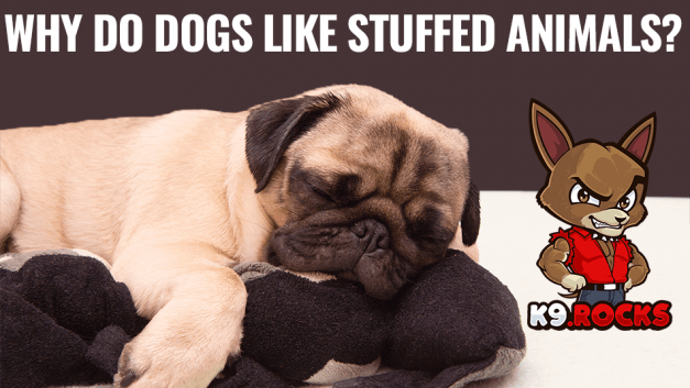Why Do Dogs Like Stuffed Animals?